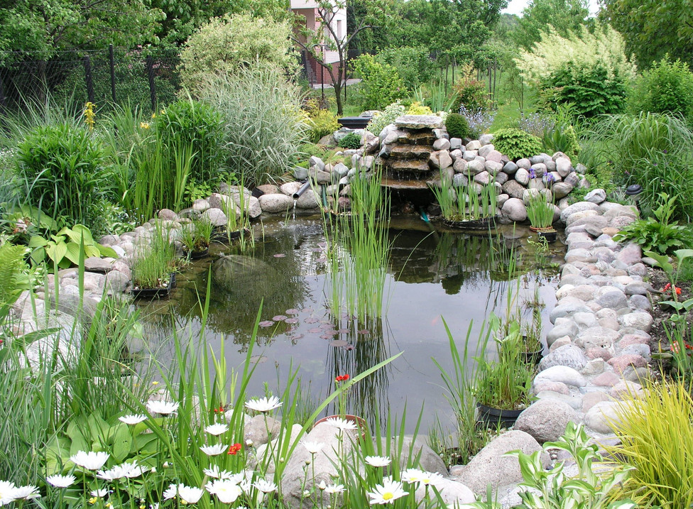 Backyard fish pond designs pool design ideas Design pond