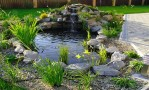 Backyard Pond Designs Small