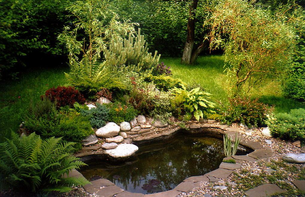 Fish Pond Designs Pictures