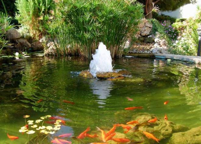 Floating pond fountains pool design ideas for Small garden pond with fountain