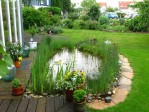 How to Make a Small Fish Pond