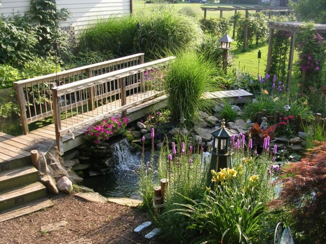 Koi Fish Pond Pictures