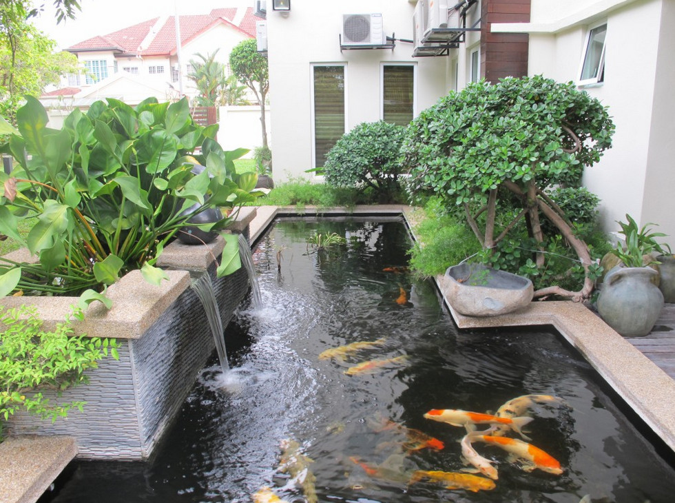 Modern Pond Design Pictures
