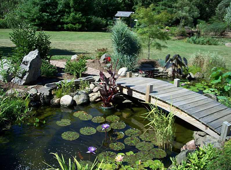 Excellent fish pond design ideas for the home owners for Fish for small outdoor pond