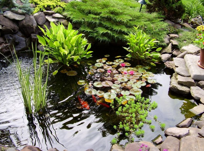 Aquatic Plants for Fish Ponds