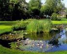 Aquatic Plants for Koi Ponds