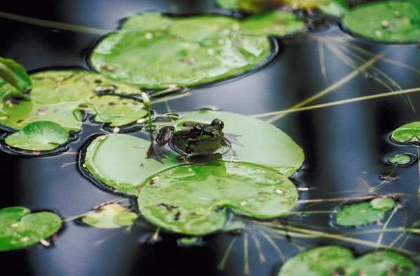 Freshwater Pond Plants