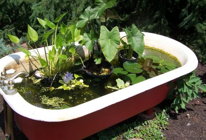Good Pond Plants