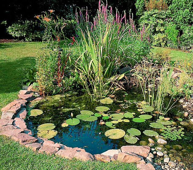 Oxygenating pond plants for small ponds pool design ideas for Best fish for small pond