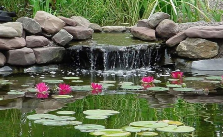 Pictures of Pond Plants
