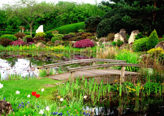 Pictures of Water Plants for Ponds