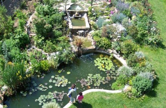 Plants for Ponds Fish