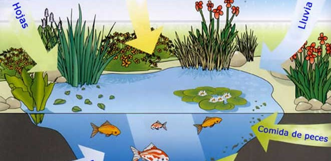 Water Plants for Small Ponds